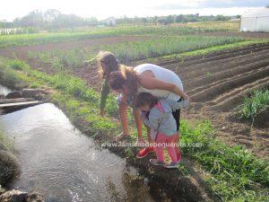 verano rural